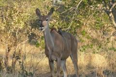 7-17 agosto 2016 - Botswana e Cascate Vittoria
