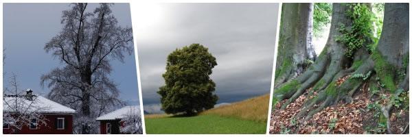 collage_alberimonum